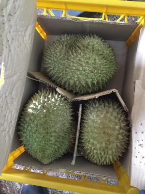 广西崇左凭祥市金枕头榴莲 80 - 90%以上 4 - 5公斤