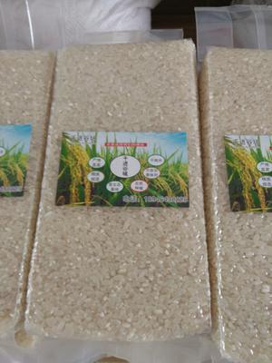 黑龙江佳木斯同江市长粒香大米 非有机大米 晚稻 一等品