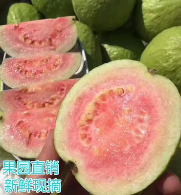 广西玉林玉州区胭脂红番石榴 200-250克