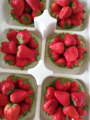 这是一张关于九九草莓 20克以上的产品图片