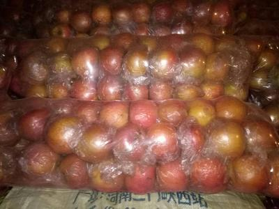 河南三门峡陕县红富士苹果 膜袋 条红 70mm以上