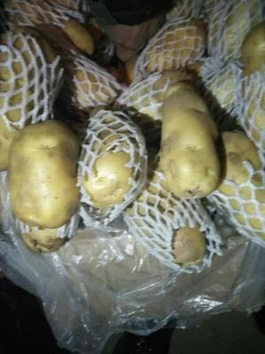 广东广州荔湾区荷兰15号土豆 3两以上