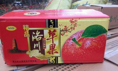 这是一张关于洛川苹果 纸袋 全红 70mm以上的产品图片