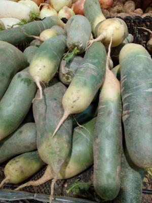 山东泰安泰山区水果萝卜 2~2.5斤
