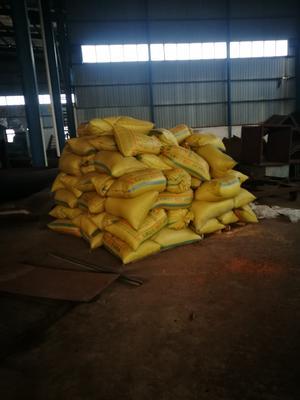 这是一张关于镇糯19 中稻的产品图片