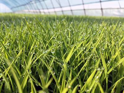 这是一张关于长粒香大米 绿色食品 晚稻 一等品的产品图片