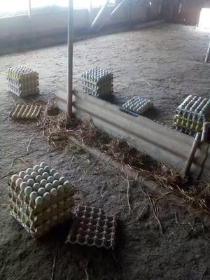 这是一张关于青皮鸭蛋 食用 箱装的产品图片