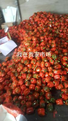 山东潍坊寿光市五彩椒 10~15cm 甜辣