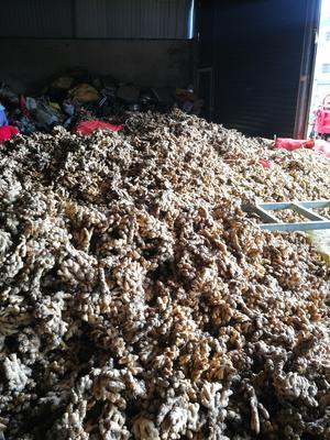 这是一张关于黄姜 带土 7两以上的产品图片