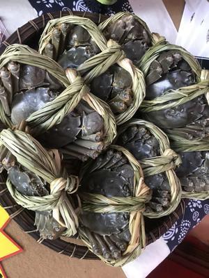 江苏泰州姜堰区姜堰簖蟹 2.5-3.0两 公蟹