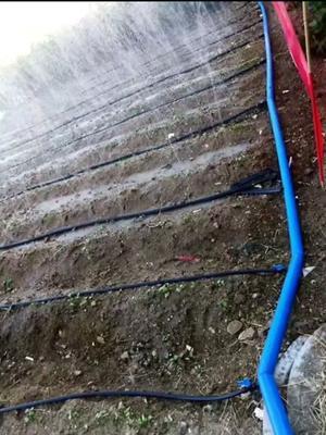 山东莱芜莱城区滴灌喷灌