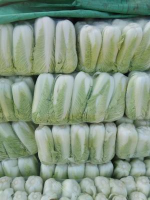 山东省德州市乐陵市北京三号大白菜 3~6斤 净菜