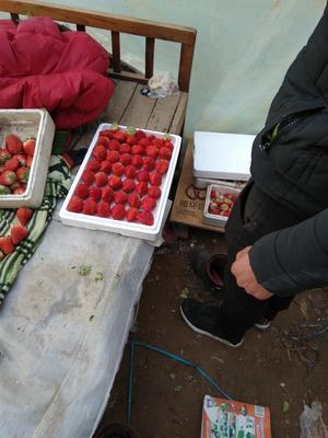 河北保定顺平县红颜草莓 30克以上