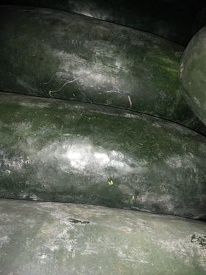 新疆乌鲁木齐沙依巴克区黑皮冬瓜 15斤以上 黑皮