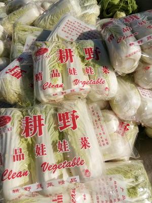 陕西省西安市临潼区高山娃娃菜 5~7两以上