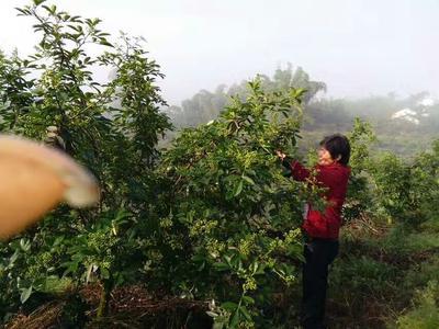 贵州省铜仁市沿河土家族自治县花椒油