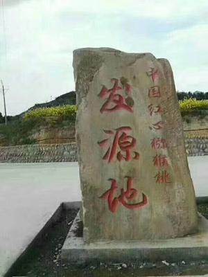 四川广元苍溪县苍溪红心猕猴桃 70~90克