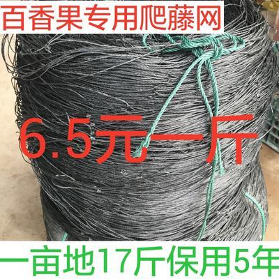 广西玉林容县爬藤网