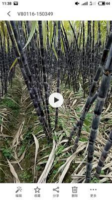 广西来宾忻城县黑皮甘蔗 2 - 2.5m 4 - 5cm