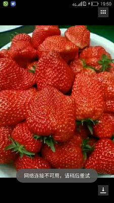 河北衡水桃城区奶油草莓 30克以上