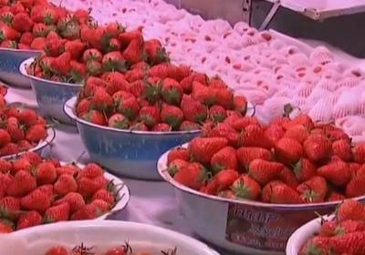 辽宁丹东东港市九九草莓 30克以上