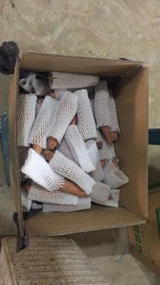 这是一张关于烟薯25 红皮 4两以上的产品图片