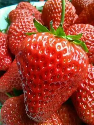 辽宁丹东东港市九九草莓 20克以上