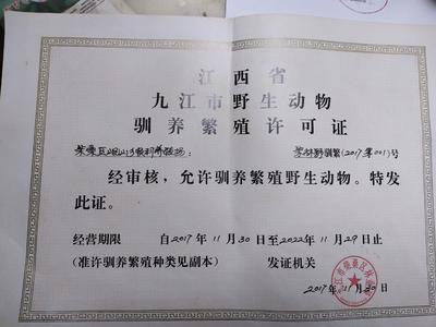 江西九江九江县中华豪猪 100斤以上