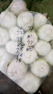 山东省青岛市胶州市胶州大白菜 3~6斤 净菜