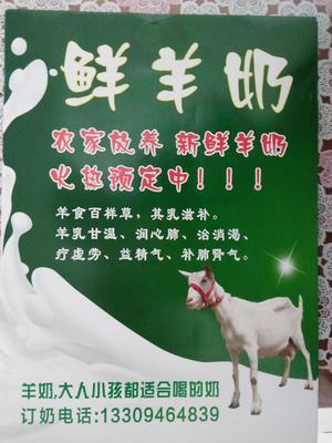 甘肃省兰州市永登县羊奶 1个月 冷藏存放