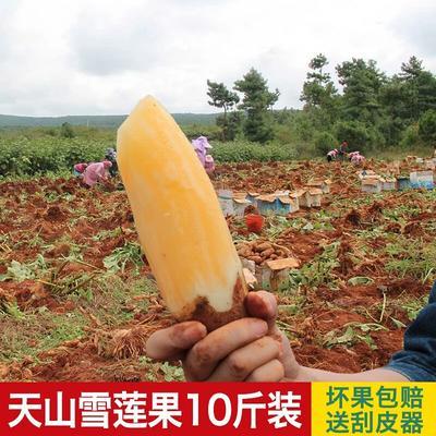 广东广州天河区云南高原雪莲果 3两以上