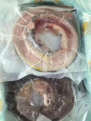 吉林白城大安市水律蛇 食用