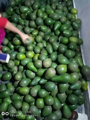 云南省德宏傣族景颇族自治州瑞丽市缅甸牛油果 200g以上