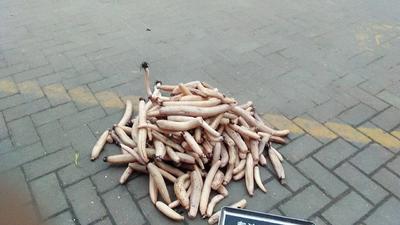 江西省南昌市新建县白莲藕带 10cm以下
