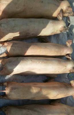 甘肃陇南武都区野猪肉 6-12个月 生肉