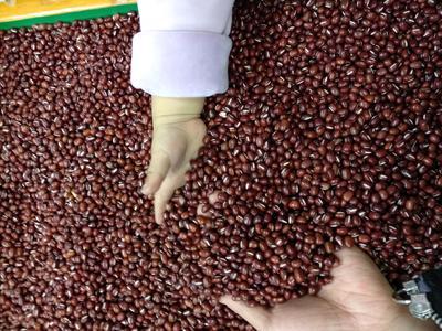 黑龙江鹤岗工农区赤小豆