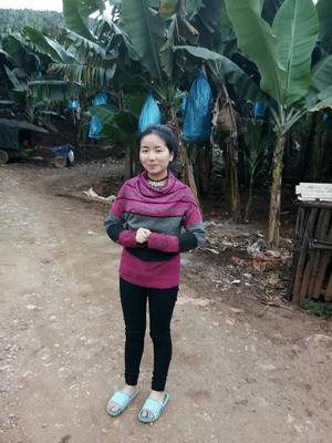 云南昆明禄劝彝族苗族自治县河口香蕉 八成熟 40 - 50斤