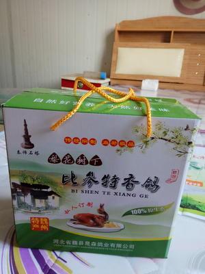 河北邯郸魏县比参特香鸽 新鲜