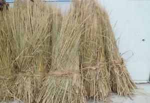 吉林长春双阳区稻草