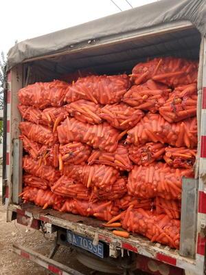 山东省济南市历城区三红胡萝卜 10cm以下 2两以下 3cm以下