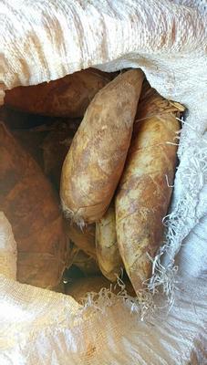 湖南益阳桃江县上海冬笋 9~13cm 鲜笋