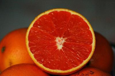 塔罗科血橙苗 嫁接苗 0.5米以下