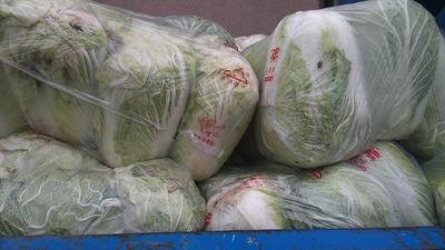 浙江省宁波市鄞州区阳春白菜 3~6斤 毛菜