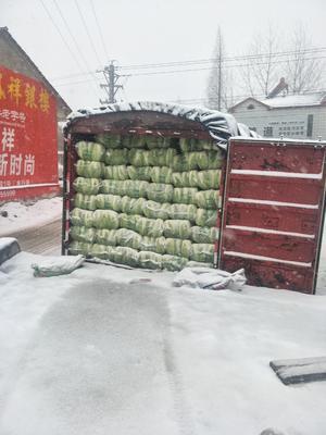 湖北省荆门市钟祥市青麻叶大白菜 3~6斤 净菜
