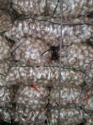 山东泰安岱岳区杂交大蒜 6.0-6.5cm 多瓣蒜