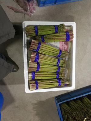 上海崇明绿芦笋 32cm以上 20mm以上