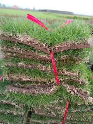 湖南郴州苏仙区马尼拉草皮