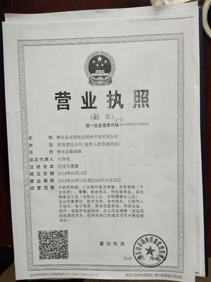 山西忻州静乐县白藜麦
