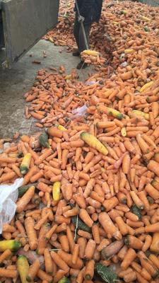 河北保定定州市三红七寸参胡萝卜 10cm以下 2两以下 3cm以下