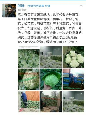 江苏徐州沛县松花菜 松散 1~2斤 乳白